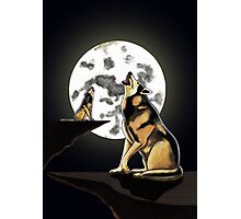 Howling at the Moon Photographic Print
