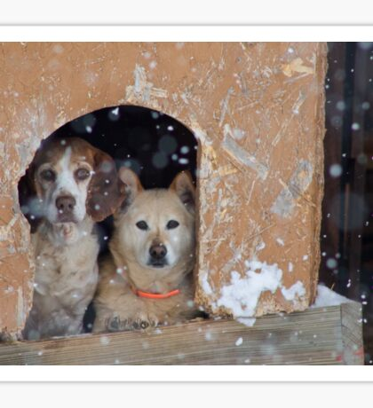 Two Dogs, One Storm Photograph Sticker