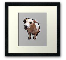 Gnar Jack Russell Terrier Framed Print
