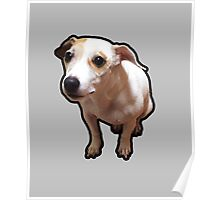 Gnar Jack Russell Terrier Poster