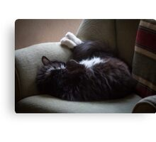 Jasper puts his feet up Canvas Print