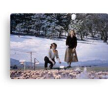 35mm Found Slide Composite - Snowball Sheep Canvas Print