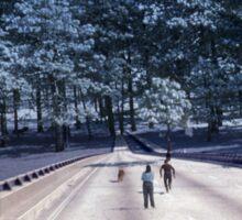 35mm Found Slide Composite - Tree Bridge Sticker