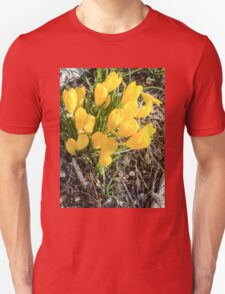 Yellow flowers of the Sternbergia lutea (Autumn daffodil) Unisex T-Shirt
