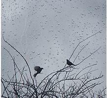 Rainy Perch Photographic Print