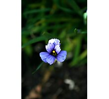 Blue beauty Photographic Print