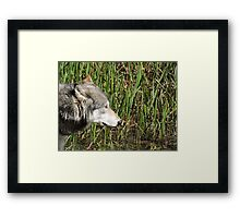 Little Reed Framed Print