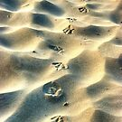0559 Steps in the sand by DavidsArt
