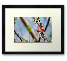 Baba Marta Day. Martenica. Bulgarian national talisman related to the frst day of spring Framed Print