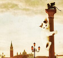 Giant Kitten in San Marco's Square (Venice) by luigitarini