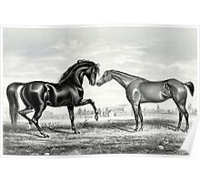 American trotting stud - Mambino Pilot, Flora Temple - Currier & Ives - 1866 Poster
