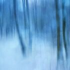 Winter forest impression 2 by floatingpilot