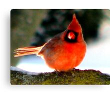 A Frosty Beak Canvas Print