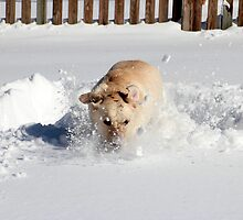 Snowday as a Dog by Valeria Lee