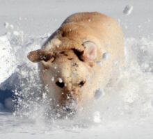 Snowday as a Dog Sticker