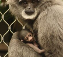 Silvery gibbon with baby Sticker