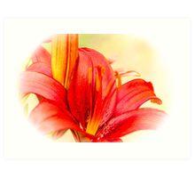 Lily 2 Art Print