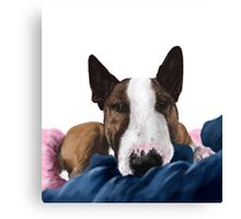 Bull terrier Bamse Canvas Print