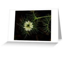 Nutmeg Flower 2 Greeting Card