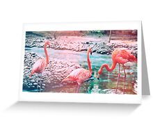 Exotic flamingos Greeting Card