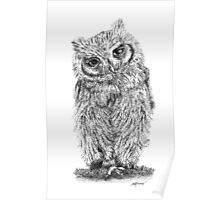 Stippled Screech Owl Poster