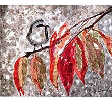 The First Snow Photographic Print