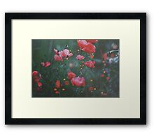 Faery Lanterns Framed Print