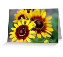 Red and Yellow Black Eyed Susan 2 Greeting Card