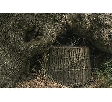 Stump Wrapped in Fence Wire Photographic Print