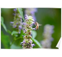 Bee on Blue Flowers 1 Poster