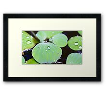 Drops on a Water Hyacinth 1 Framed Print