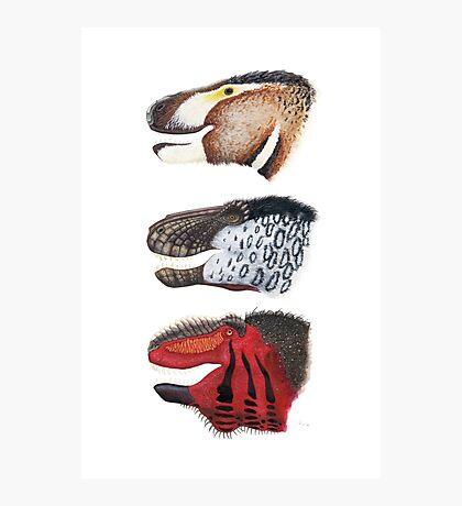 Triple rex Photographic Print