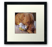 Pitbull Pose Framed Print
