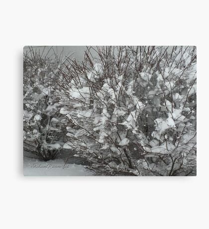Winter Bush Canvas Print