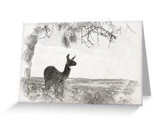 Llama 'Geronimo' Greeting Card