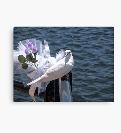 Wedding Dove Canvas Print