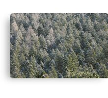 Lost in Pine Canvas Print