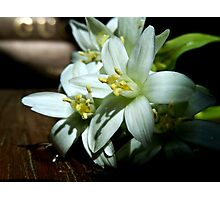 STAR OF BETHLEHEM FLOWERS Photographic Print
