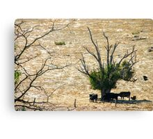 Country Landscapes, Western Australia Canvas Print