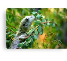Climbing Lizard Canvas Print