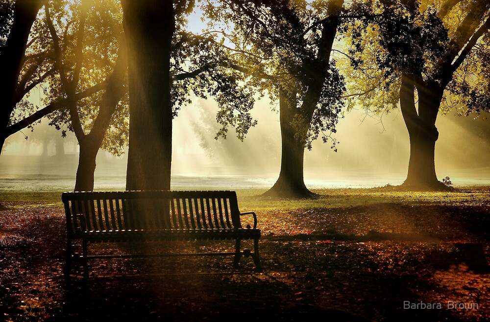 Morning in the Park by Barbara  Brown
