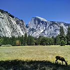 Yosemite National Park, Half Dome by EricKulikoff