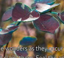 The Wonders, Rmi Sticker
