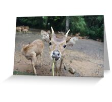 Cute Deer - Eating Vegetables Greeting Card