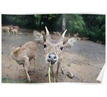 Cute Deer - Eating Vegetables Poster