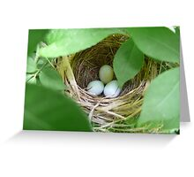 Indigo Bunting Nest Greeting Card