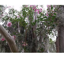 Spanish Moss and Floral Photographic Print
