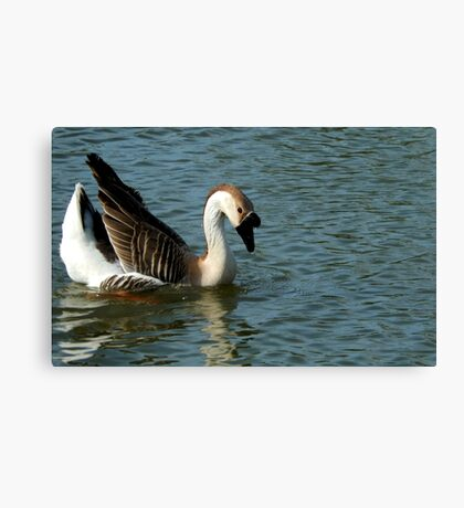 DUCK SWAN ON THE WATER Canvas Print