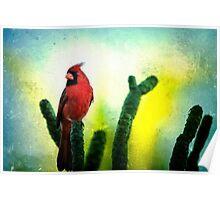Red Cardinal No. 1 - Kauai - Hawaii Poster