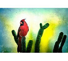 Red Cardinal No. 1 - Kauai - Hawaii Photographic Print